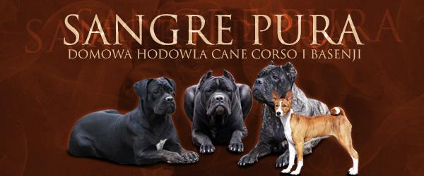Sangre Pura - domowa hodowla Cane Corso i Basenji